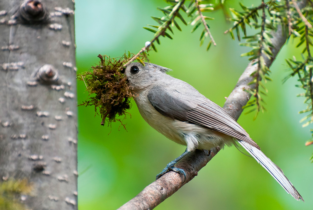 Tree Care for Birds – Unlocking the power of arboriculture